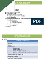 Tema 3 - Patología celular