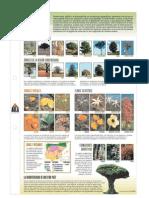 Flora de España