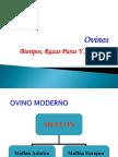 razas-ovinas-1223906330728308-8