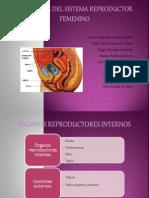 Histología del sistema reproductor femenino