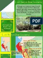 4-bosquesecoecuatorial-091015075054-phpapp01