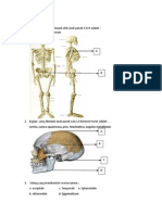Prediksi Soal Anatomi