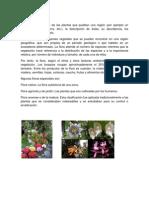 Flora, Fauna, Selva y Bosques