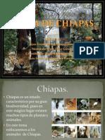 Fauna de Chiapas