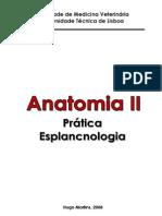 Anatomia II - Práticas Esplancnologia
