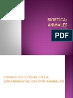 Bioetica Animales