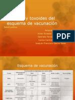 Vacunas y toxoides del esquema de vacunación