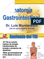Anatomia Gastrointestinal Final