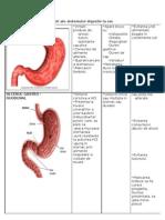 Boli-sistem digestiv