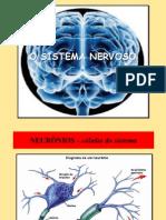 Sistema Nervoso Central Denise