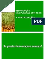poliniplantas
