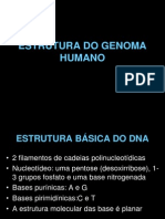 Estrutura.do.Genoma.humano