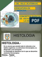 Tejidos básicos Anatomía