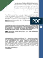 142_evaluacion_rehabilitacion_neuropsicologica