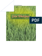 Five Secrets to Growing Great Wheat Grass