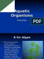 Aquatic Organisms