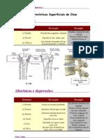 Características Superficiais do Osso