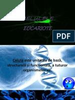 CELULELE eucariote