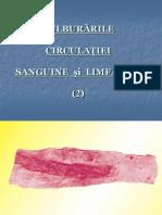 TEMA 06.Tulb.circulatorii II
