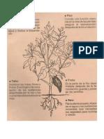 Funciones d La Pate de Una Planta