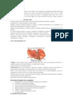 Funções do Fígado