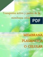 Transportes Activo y Pasivo de La Membrana Celular