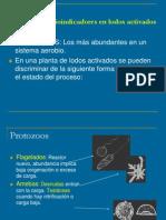 Enfermedades de Transmisi%F3n h%EDdrica