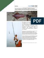 Pesca. La Pesca Del Calamar Desde Tierra