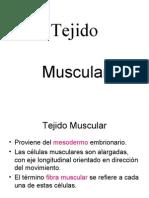 Muscular 1