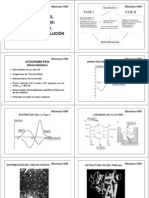IV-2 Citocromo P450