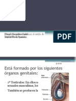 El Aparato Re Product Or Masculino Ppt