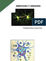 Impulso Nervioso y Sinapsis