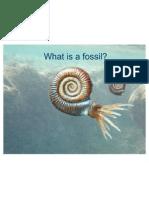 Fossils Intro