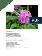 Monografia ''Mala Miel'' en Español