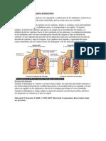 Funcionamiento Del Aparato Respiratorio