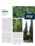 Captivating Native Conifer Cultivars