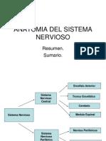 REVIENDO ANATOMIA DEL S. NERVIOSO Y MUSCULO ESQUELETICO