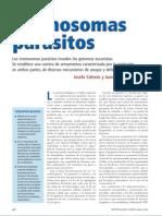 cromosomas parásitos invaden los genomas eucariotas