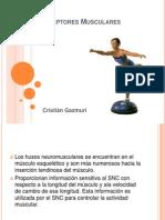 Propioceptores Musculares