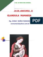 GLANDULA MAMARIA UNCP