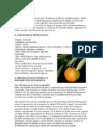 Cultivo de La Mandarina