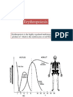 Erythropoiesis Lect 3