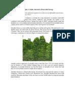 Jatropha - Sustainable investment - Biomass Investment