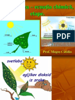 Fotosinteza – ecuatia chimica, etape(prezentare Catalin)