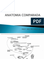 ANATOMIA COMPARADA 4