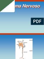 01 Sistema Nervoso, Sinapsi, Neurotrasmettitori