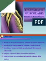 01  Muscolo scheletrico