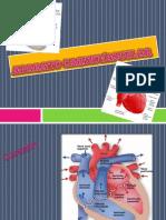 Aparato Cardio Bascular Diapositivas