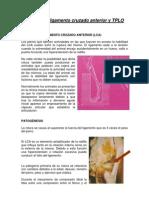 Cirugia Rodilla y TPLO CEPPA