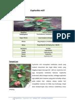 Euphorbia milii